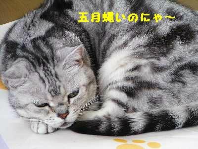 P1010060_sh01.jpg