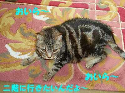 P6100007_sh01.jpg