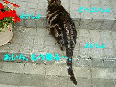 P7030013_sh01.jpg