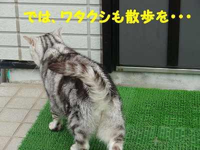 P7030034_sh01.jpg